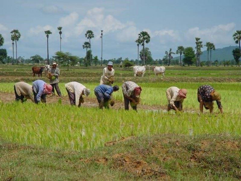 0000468_angkor-bio-cogen-rice-husk-power-project