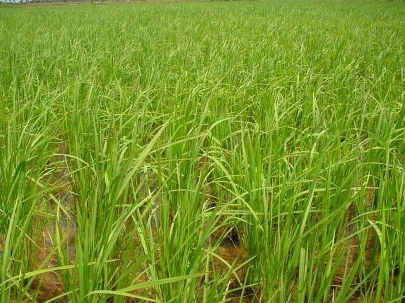 0000471_angkor-bio-cogen-rice-husk-power-project