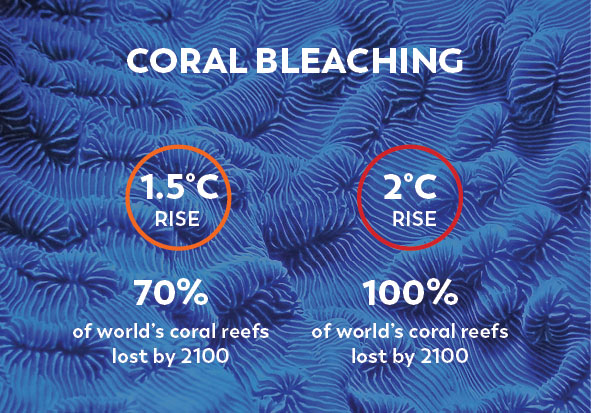 Climate Change Facts Coral Bleaching
